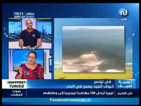 نات نسمة : تونس: خروف العيد يسبح في البحر