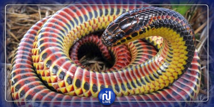 Un serpent ''arc-en-ciel'' rarissime découvert en Floride