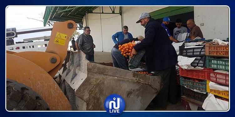 إتلاف أطنان من المشمش الرفيع بعد فشل تصدريها إلى ليبيا والجزائر (صور)