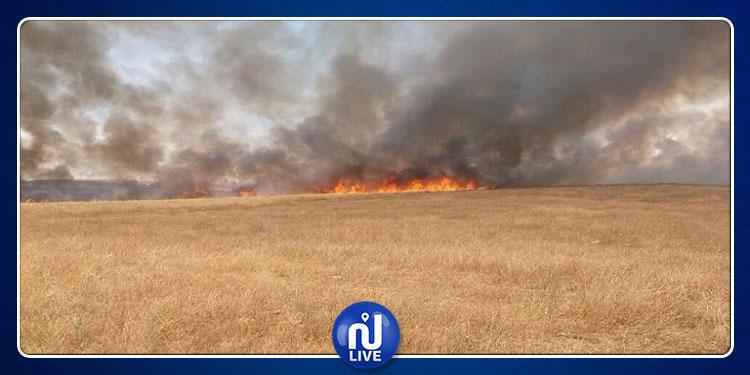 الفحص: حريق بضيعة فلاحية يلتهم 50 هكتارا من الحبوب