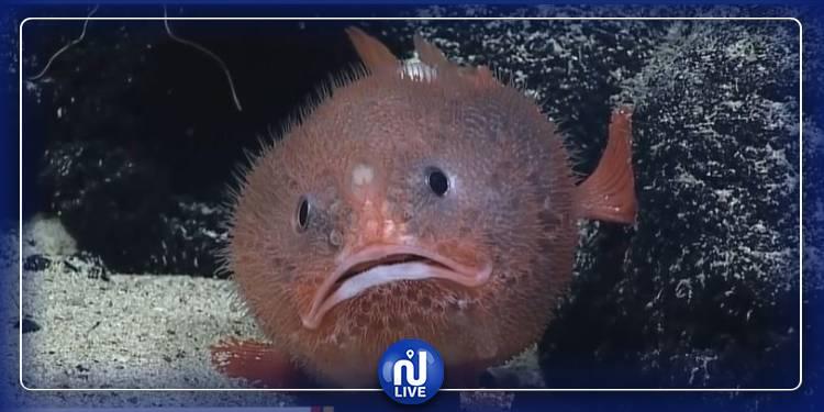دراسة: الأسماك تشعر باليأس والكآبة