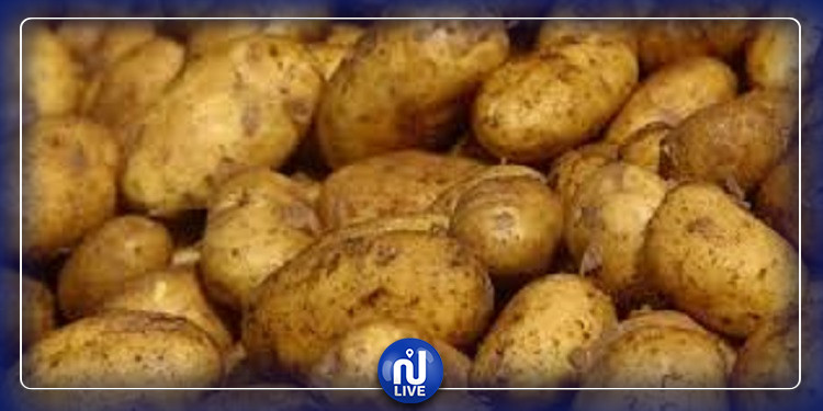 نابل: مطالب بالتسريع في قبول البطاطا الفصلية لتفادي مزيدا من الخسائر
